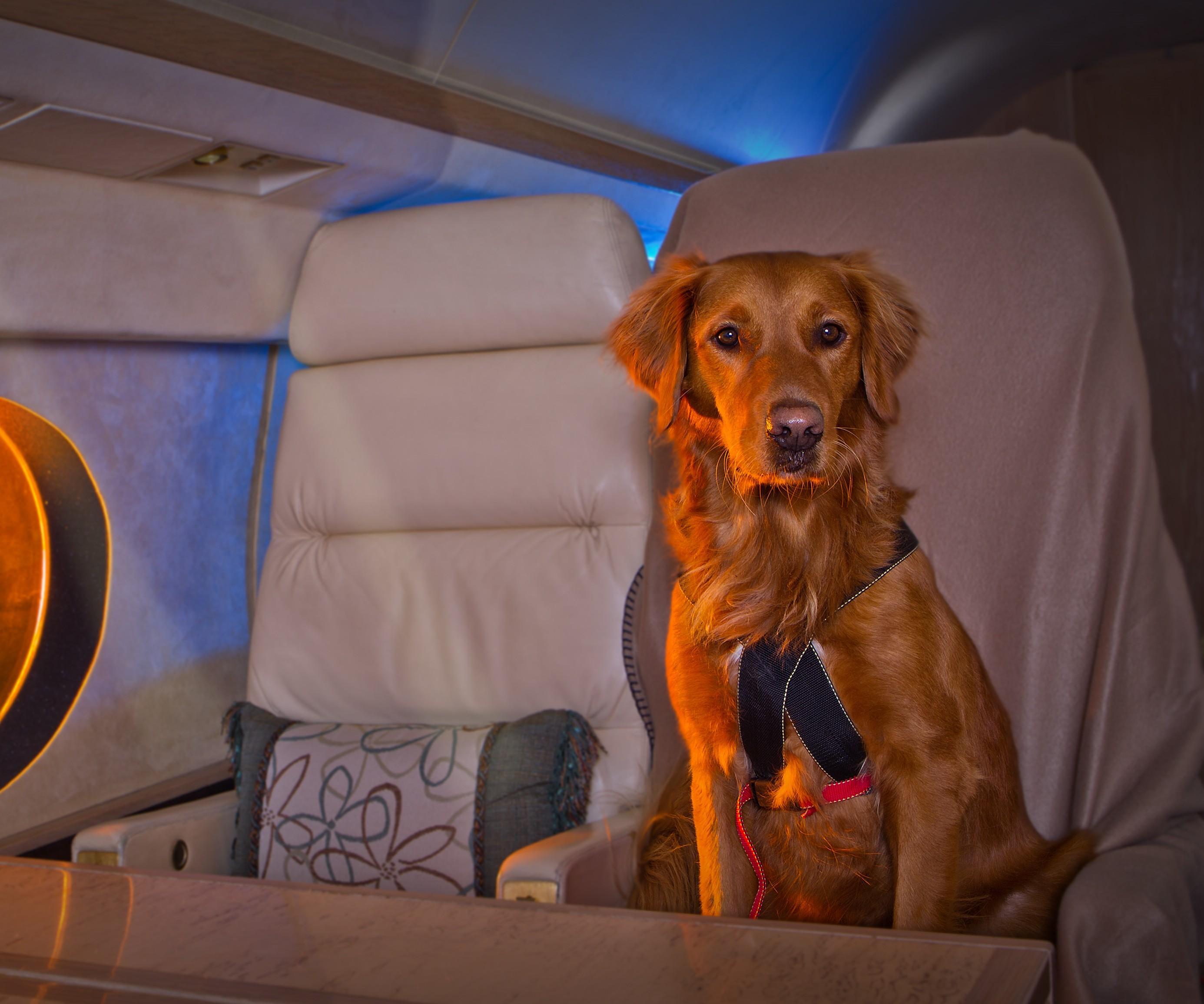 Собака на самолете картинка
